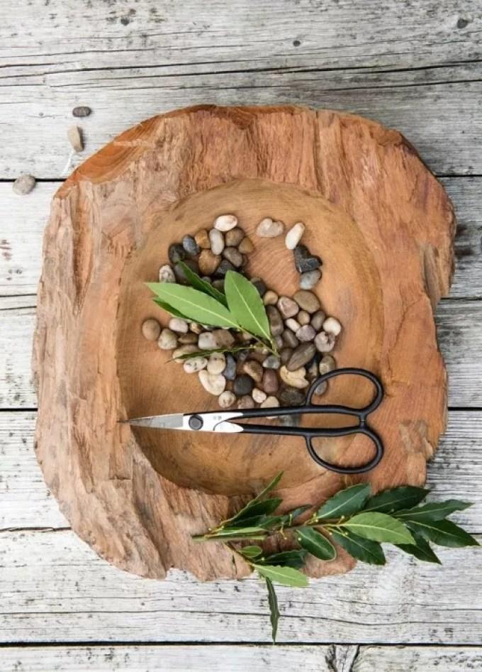 Buitenleven | Laurier = Tuinplant van de Maand oktober - Woonblog StijlvolStyling.com