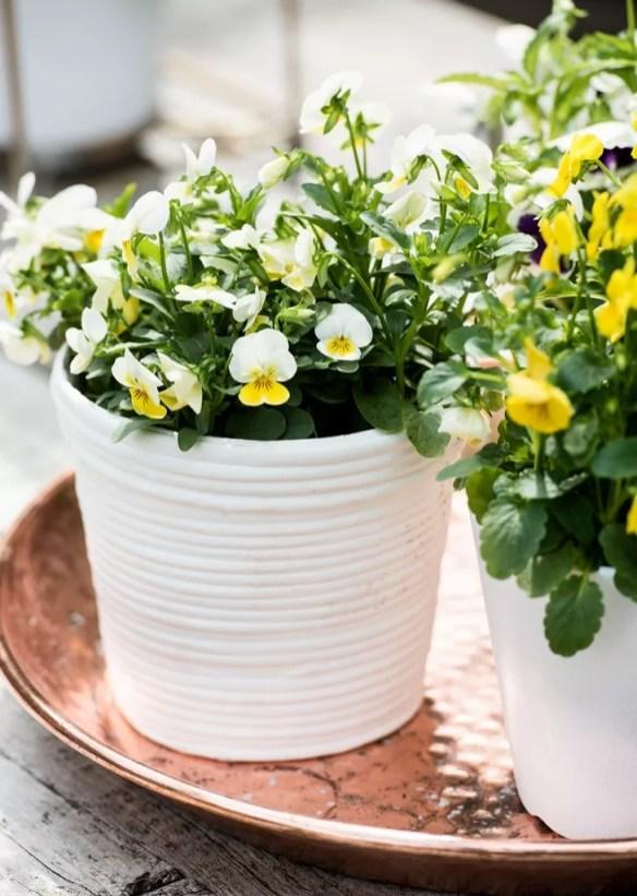 Buitenleven   De mooiste tuinplanten voor het najaar - Woonblog StijlvolStyling.com