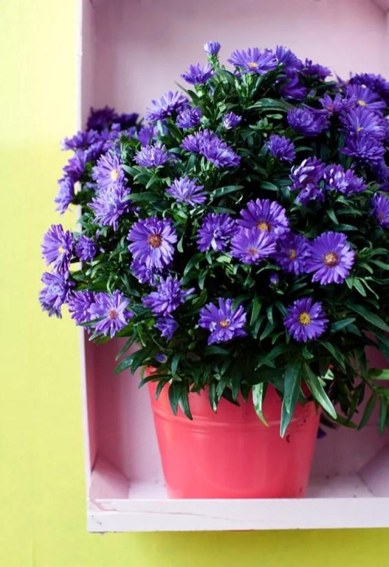 Buitenleven | De kleurrijke herfsttuin - Woonblog StijlvolStyling.com