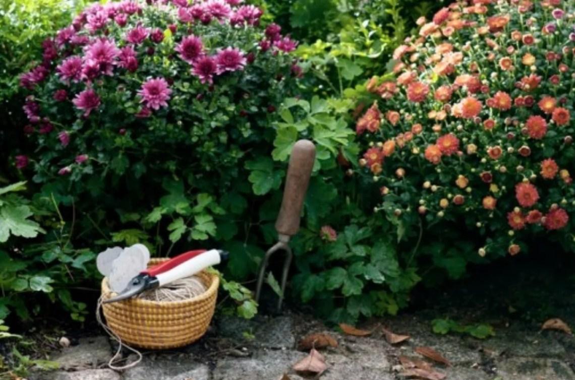 Buitenleven | 7 handige onderhoud tips voor jouw najaarstuin - #woonblog StijlvolStyling.com