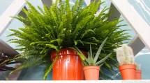 Groen wonen   Interieurtrend fris en energiek met zuiver groen - Woonblog StijlvolStyling.com