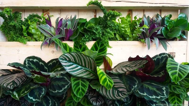 Groen wonen   Eerste hulp tips bij planten verzorgen en plant problemen   Woonblog StijlvolStyling.com