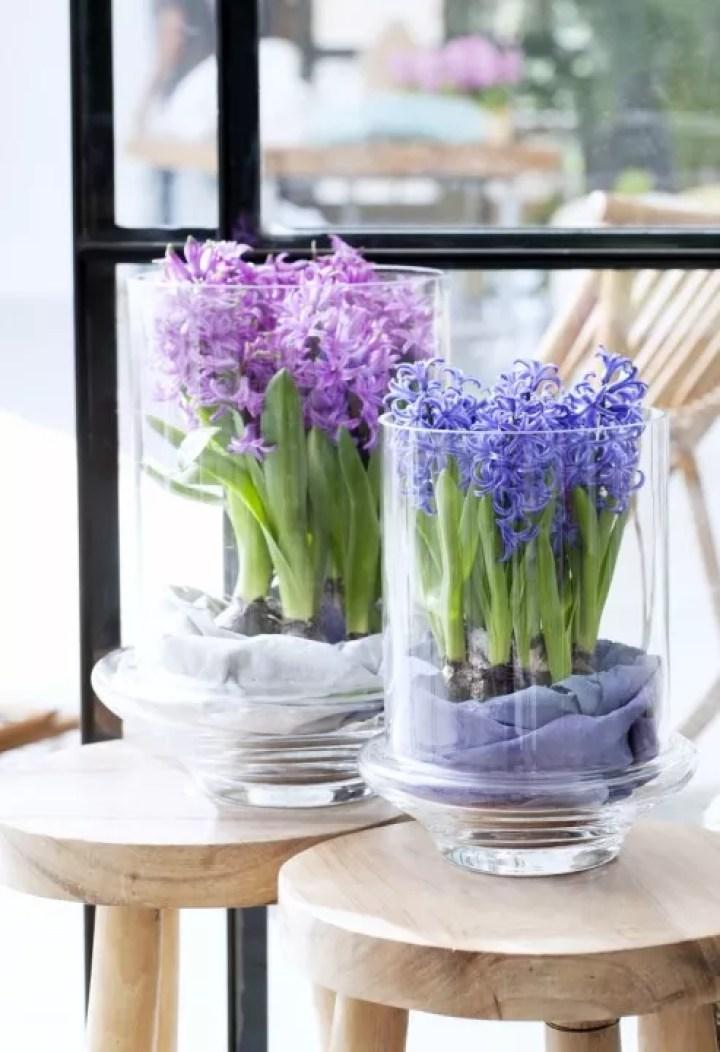 Groen wonen   Hyacint = Woonplant vd Maand december - Woonblog StijlvolStyling.com