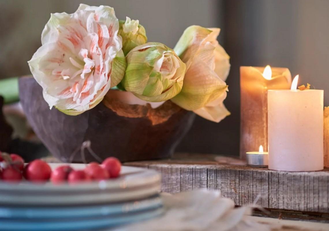 Groen wonen   Kerst met de planten & bloemen van 2015 - Woonblog StijlvolStyling.com