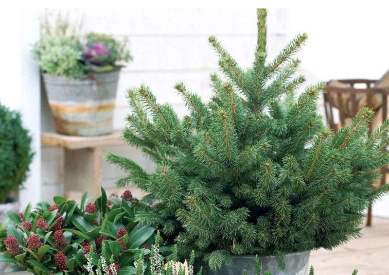 Tuin inspiratie feestdag decoratie op jouw balkon of terras stijlvol styling woonblog - Decoratie tuinterras ...