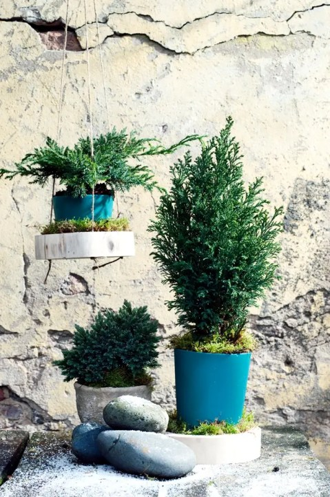 Buitenleven | Kleur je tuin met coniferen. (Tuinplant van de Maand januari) - Woonblog StijlvolStyling.com