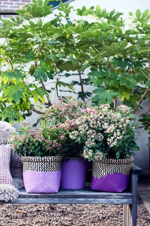 Buitenleven   Viburnum (Sneeuwbal) - Groene sneeuwpret in de tuin - Woonblog StijlvolStyling.com