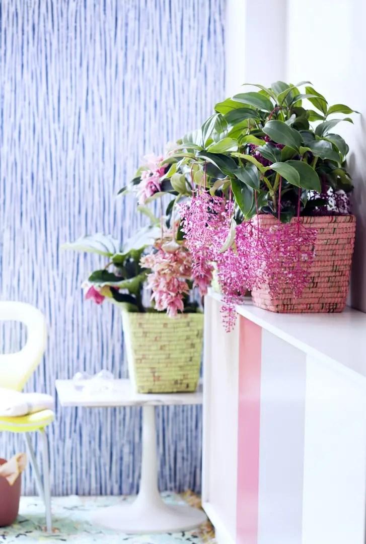 Groen wonen | Stijltrend 2016 nr. 2 More is More - Woonblog StijlvolStyling.com (Style trends/ Interiortrends More is More)