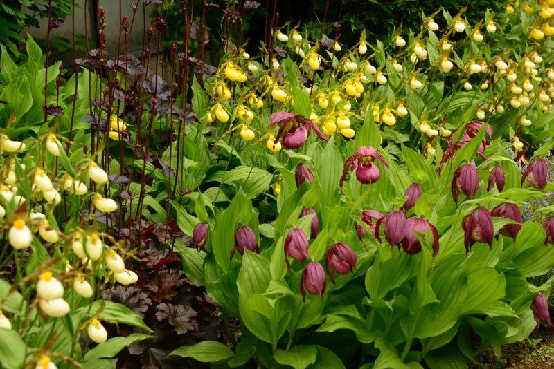 Groen wonen | Zomers wonen met de orchidee - Woonblog StijlvolStyling.com