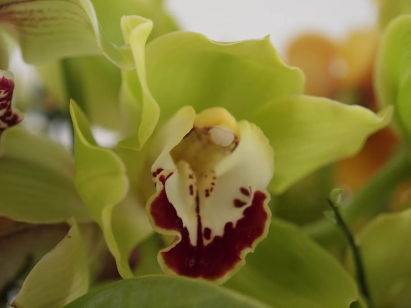 Groen wonen | Zomers wonen met de orchidee - Woonblog StijlvolStyling.com - Styling SBZ Interieur Design