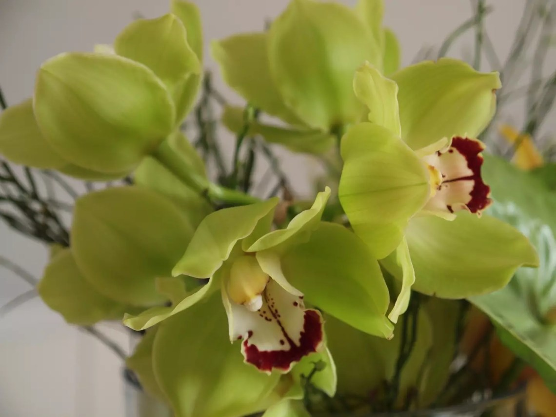 Groen wonen   Zomers wonen met de orchidee - Woonblog StijlvolStyling.com