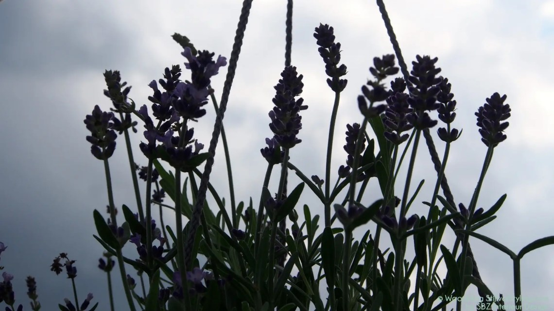 Buitenleven | Relaxen met Lavendel - Woonblog StijlvolStyling.com