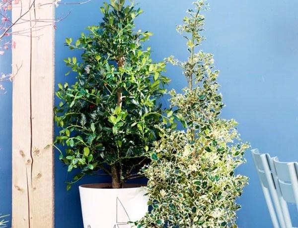 Buitenleven | Veelzijdig Hulst brengt vorm & groen in de tuin - Woonblog StijlvolStyling.com