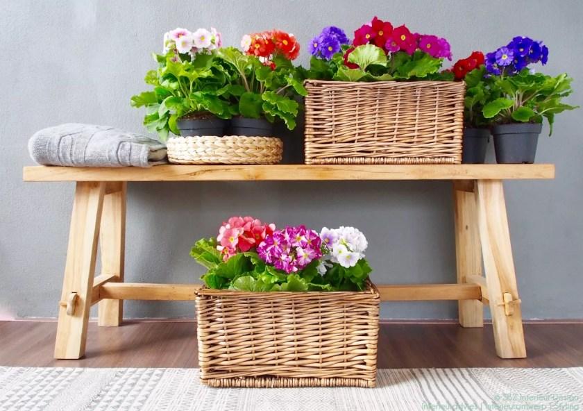 Groen wonen   Haal de lente in huis met Primula Touch me - Woonblog StijlvolStyling.com