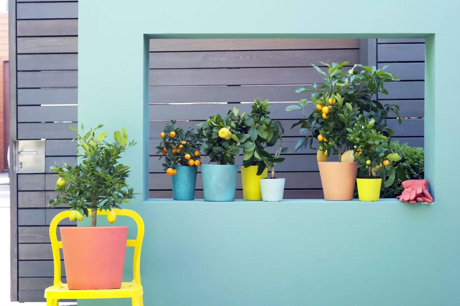 Buitenleven | Citrusboompjes = fris en fruitig - Woonblog StijlvolStyling.com