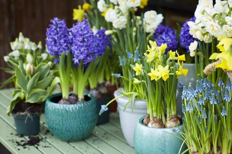 Buitenleven | Lentegevoel met bloembollen op pot - Woonblog StijlvolStyling.com