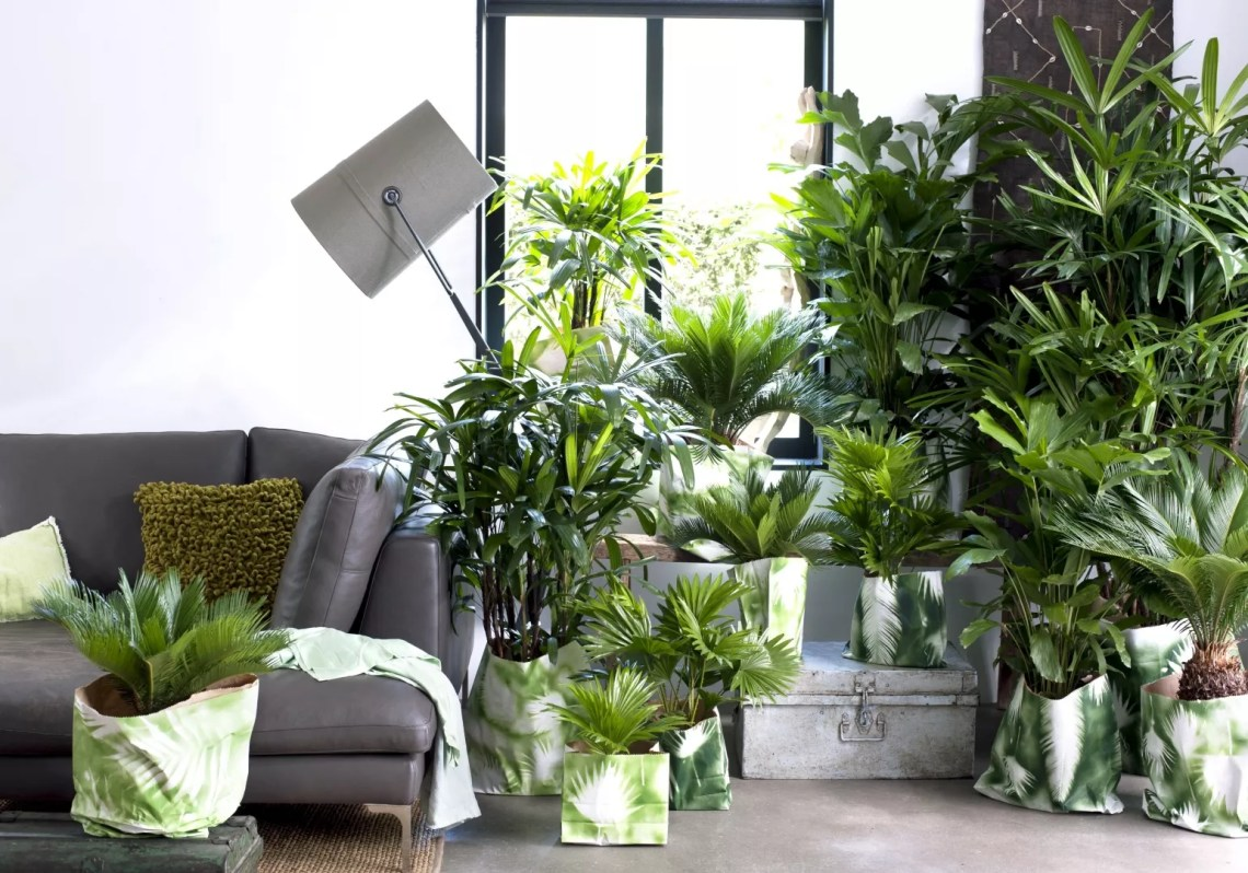 Groen wonen | Let's get tropical: exclusieve palmen - Woonblog StijlvolStyling.com (beeld: Bloemenbureau Holland)