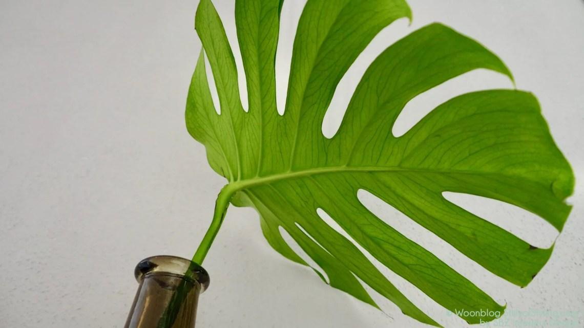 Groen wonen   Monstera bladeren zijn ware woontrend - Fotografie en interieur styling door woonblog StijlvolStyling.com by SBZ Interieur Design