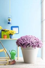 Tuin inspiratie | Na-zomeren met de Bolchrysant - Woonblog StijlvolStyling.com