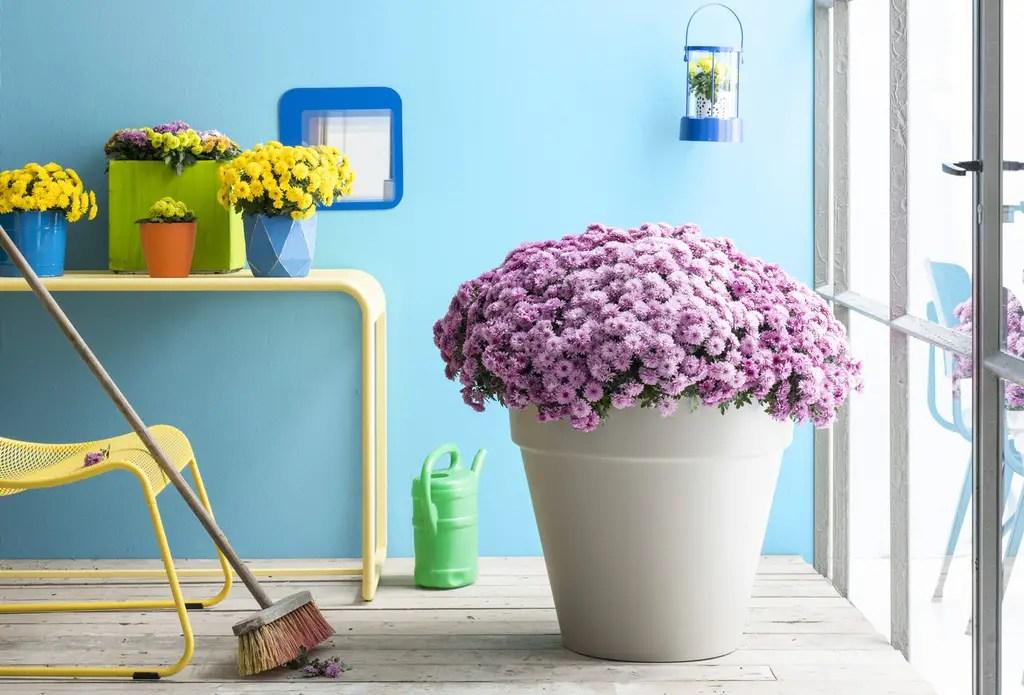 Tuin inspiratie | Na-zomeren met de Bolchrysant - Woonblog StijlvolStyling.com | Beeld: Bloemenbureau Holland - Mooiwatplantendoen.nl
