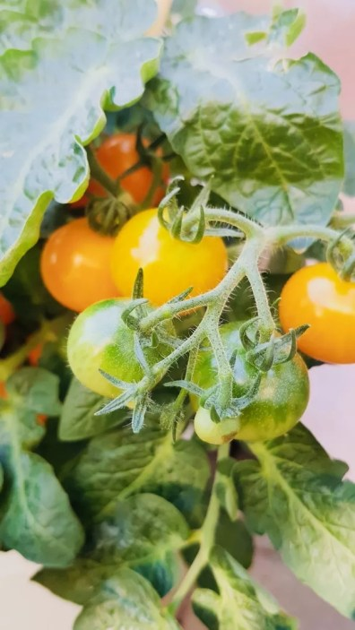 Tuin inspiratie   Groenten en fruit uit eigen tuin of balkon © Lifestyle- & woonblog StijlvolStyling.com