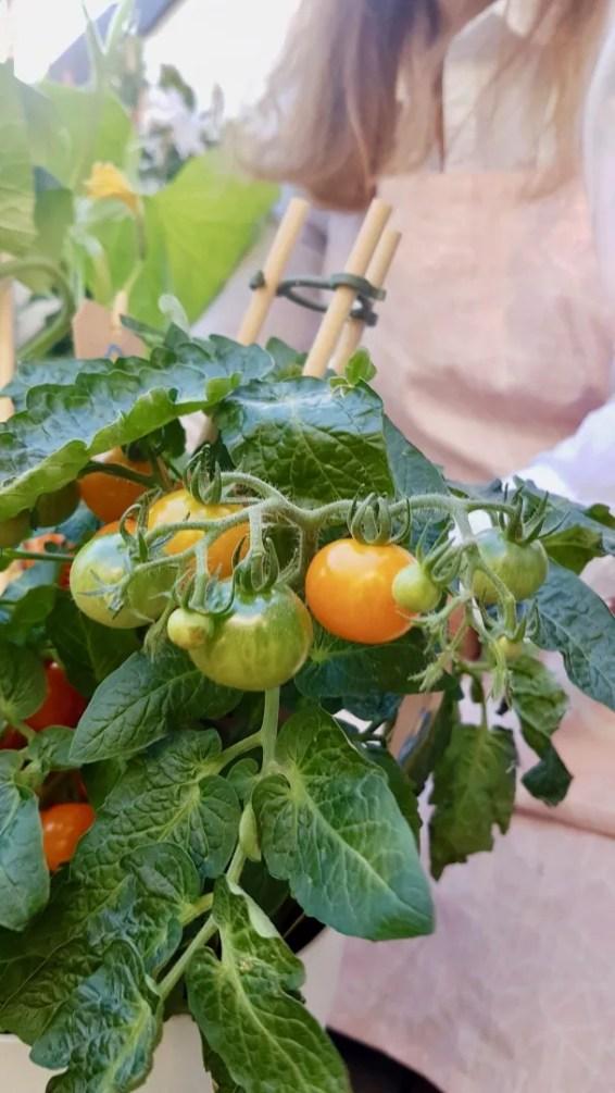 Tuin inspiratie | Groenten en fruit uit eigen tuin of balkon © Lifestyle- & woonblog StijlvolStyling.com