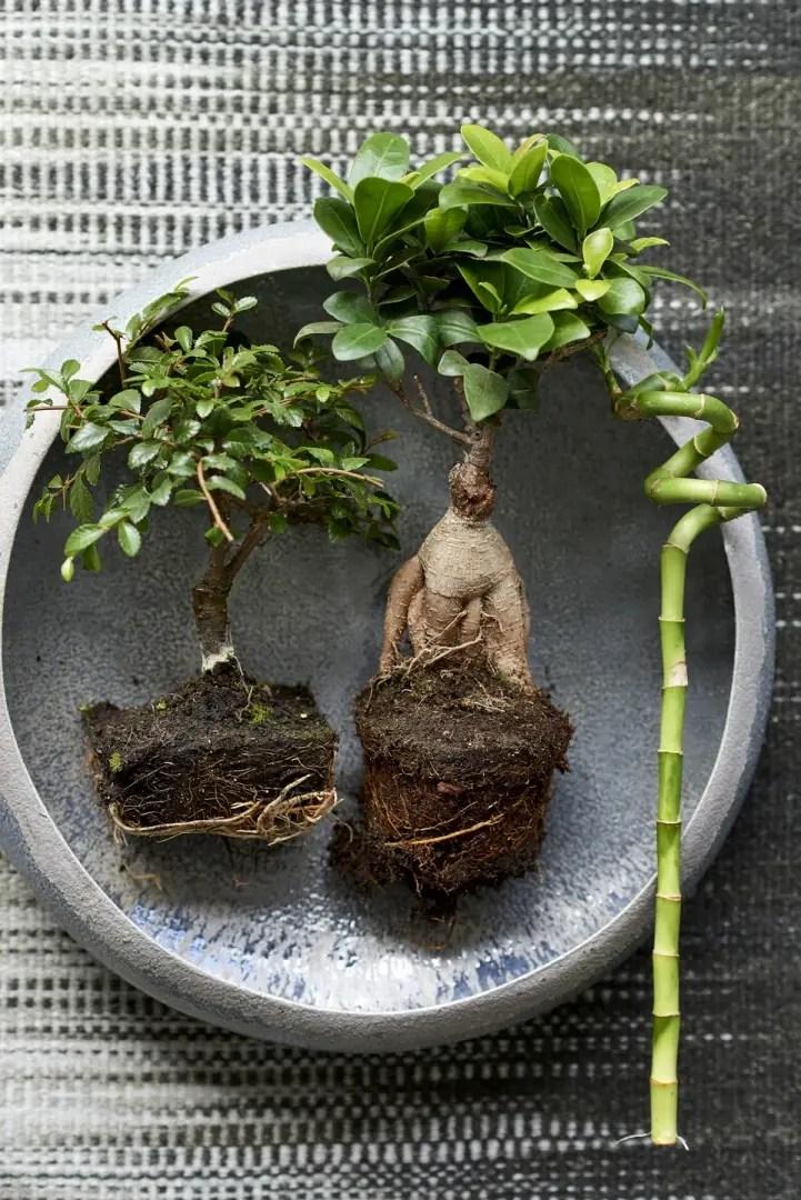 Groen wonen | Zen planten om bij tot rust te komen - Woonblog StijlvolStyling.com (beeld: mooi wat planten doen)