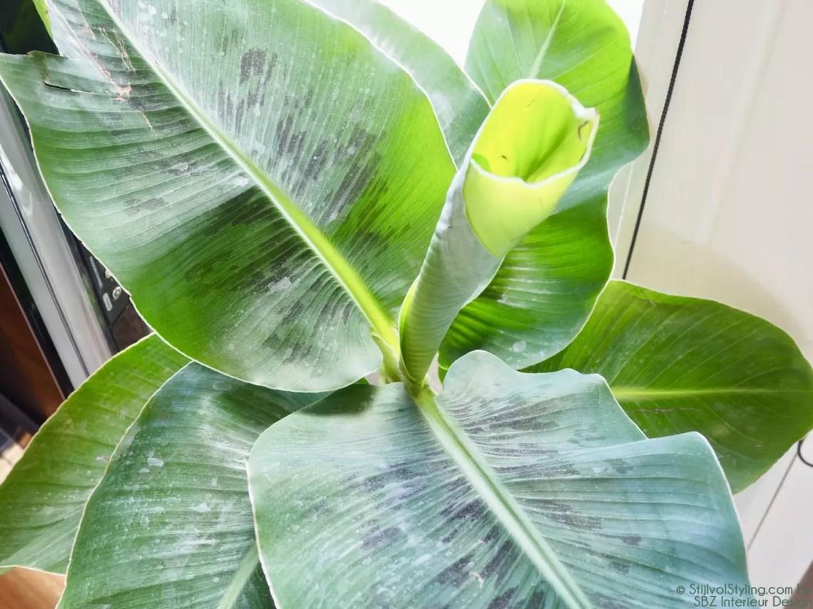 Plantentrends / bloementrends | SBZ Interieur Design © StijlvolStyling.com - sbzinterieurdesign.nl