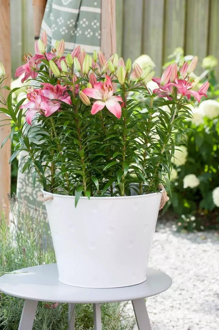 Tuin inspiratie   Lelies-op-pot: bloementrend van 2019 - woonblog StijlvolStyling.com (beeld: ibulb)