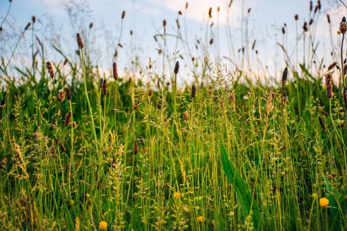 Lifestyle | Last van hooikoorts? Koop een luchtbevochtiger!