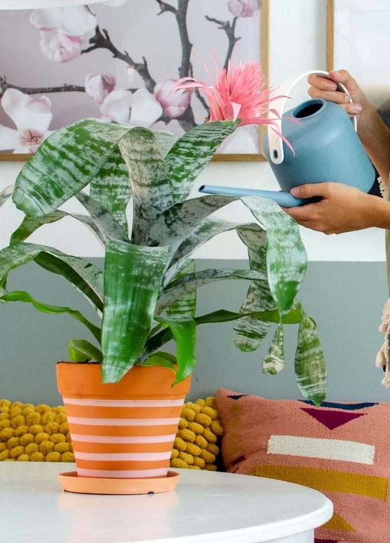 Groen wonen | Paradijselijke Urban Jungle trend met Bromelia - Woonblog StijlvolStyling.com