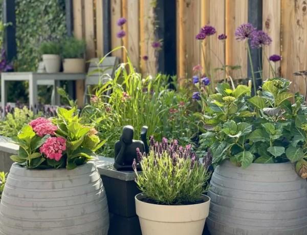 Tuin inspiratie - Magical Hortensia - Stijlvol Styling - door Susanne Bolkestein - Zum Vorde