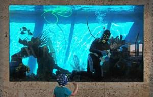 Sea Aquarium, Curacao