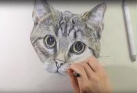 Disegnare dipingere gatti gattini  Gratis tutti i ...