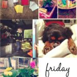 Friday Fives + 22 Weeks!