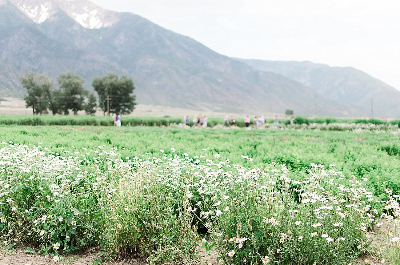 Young Living Lavender Farm, Mona, Utah (33)
