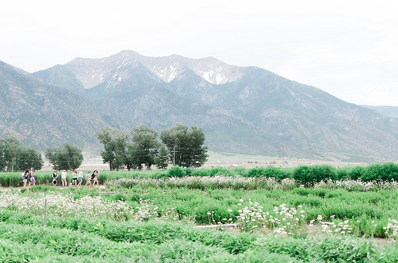Young Living Lavender Farm, Mona, Utah (25)