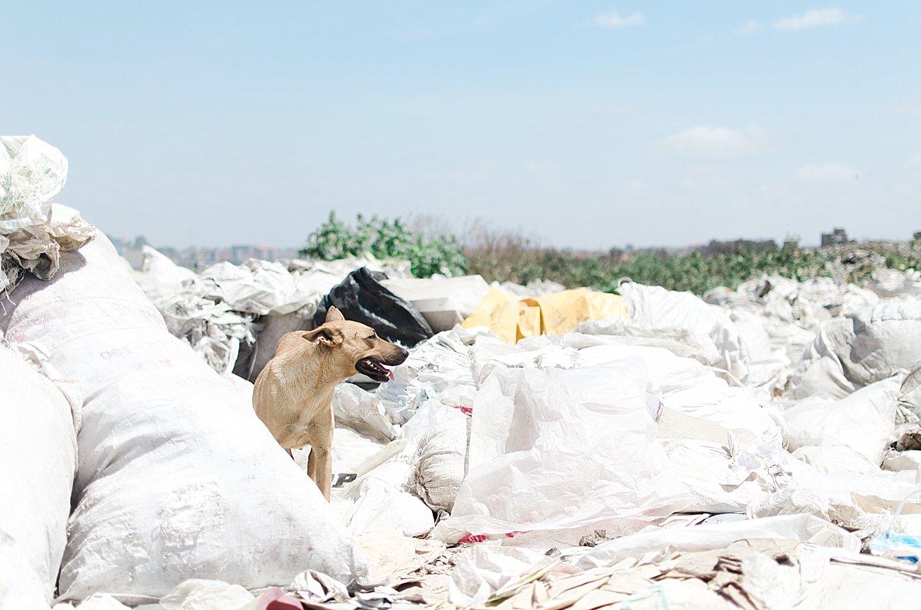 Nairobi, Kenya landfill - January 2017 (3)