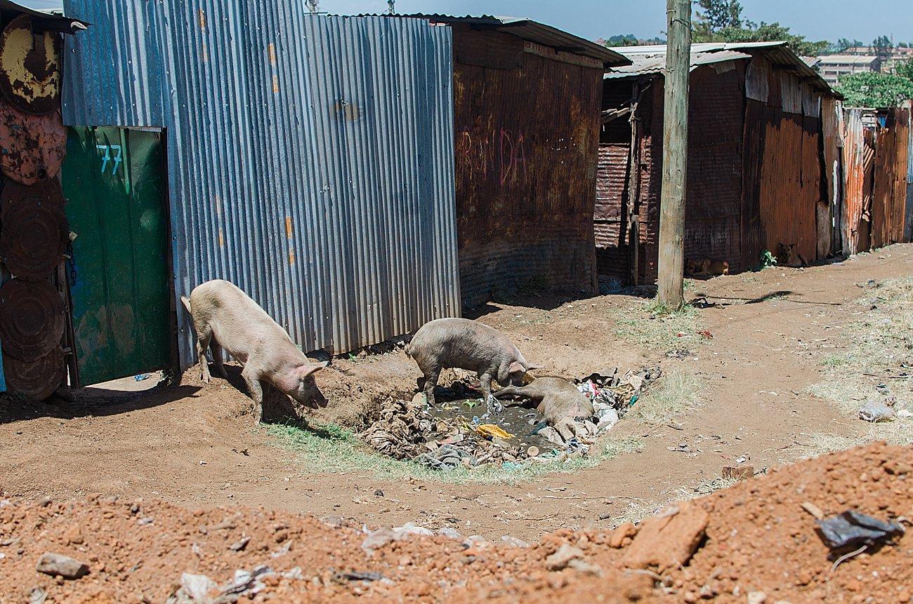 Nairobi, Kenya landfill - January 2017 (12)