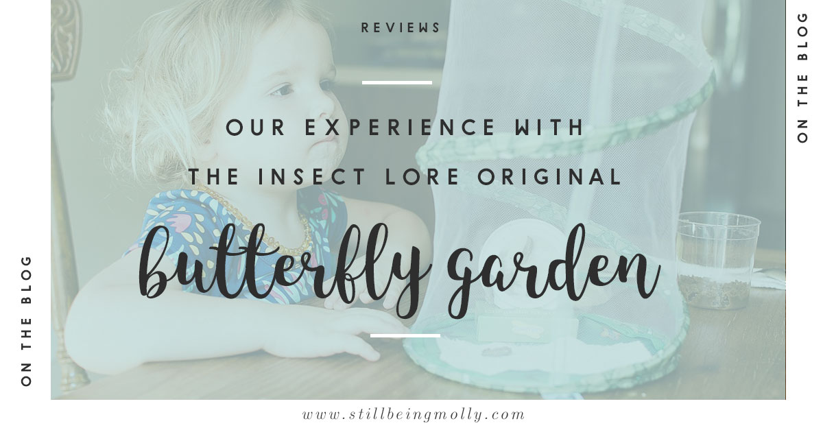 """""""Growing Butterflies at Home"""" - Insect Lore Original Butterfly Garden Review (21)"""
