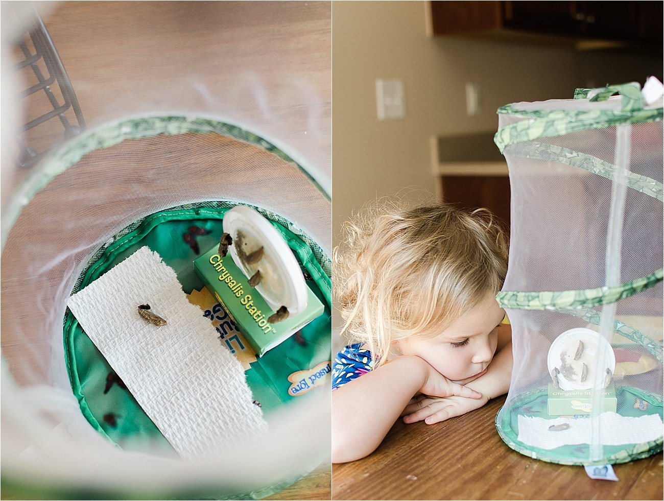 """""""Growing Butterflies at Home"""" - Insect Lore Original Butterfly Garden Review by lifestyle blogger Still Being Molly"""