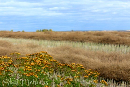 Yellow flowers in prairie field