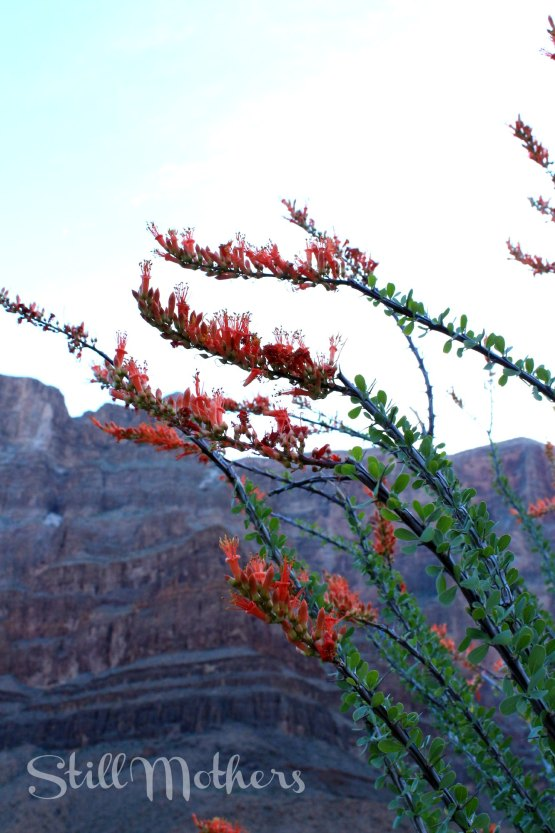 red flowers, grand canyon