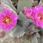 미국 서부지역 자연 100배 즐기기 (15) Anza-Borrego Desert State Park