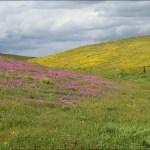 미국 서부지역 자연 100 즐기기 (17) Carrizo Plain National Monument