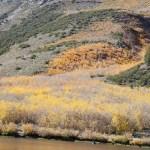 미국 서부지역 자연 100배 즐기기 (8) Sierra Autumn Aspen Leaves