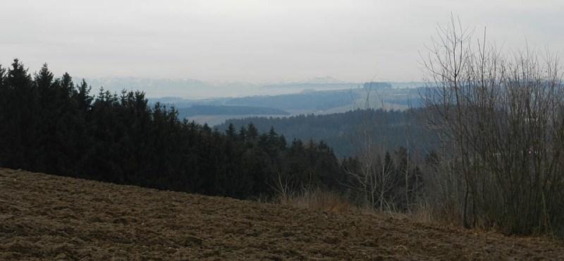 Wald mit fernblick