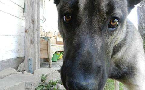 Rover unser Hund