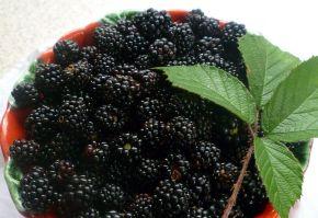 Foarte mulți horticultori și pomicultori știu că lumina influențează culoarea fructelor și a legumelor.