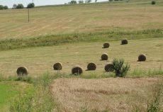 renta agricola